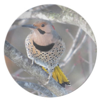 Common Flicker Plate