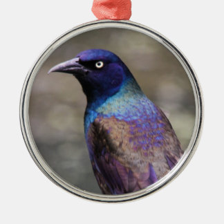 Common Grackle Metal Ornament