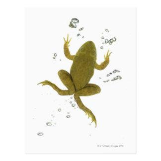 common green frog postcard
