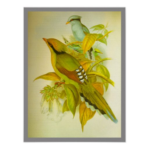 Common Green Magpie Print