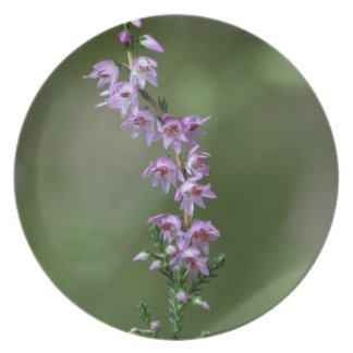 Common Heather (Calluna vulgaris) Party Plates