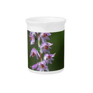 Common Heather (Calluna vulgaris) Pitcher
