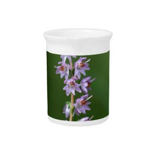Common Heather (Calluna vulgaris) Pitchers