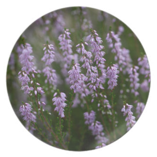 Common Heather (Calluna vulgaris) Plates