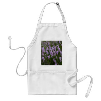 Common Heather (Calluna vulgaris) Standard Apron