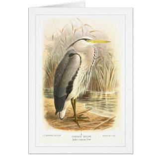 Common Heron Card