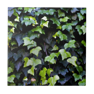 Common ivy tile