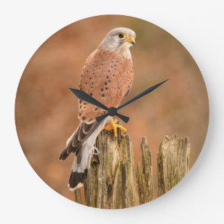 Common Kestrel Large Clock