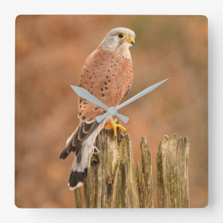 Common Kestrel Square Wall Clock