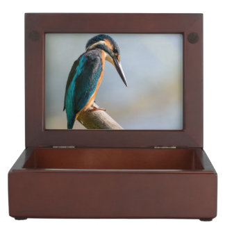 Common Kingfisher Keepsake Box