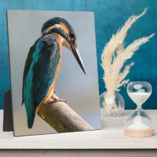 Common Kingfisher Plaque