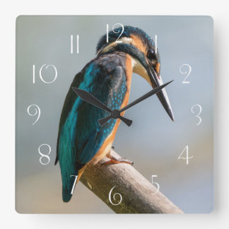 Common Kingfisher Square Wall Clock