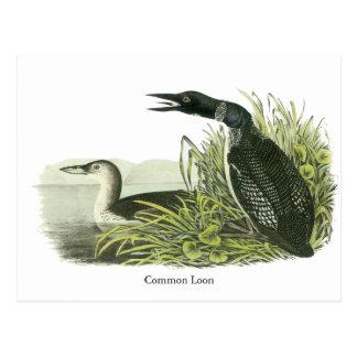 Common Loon, John Audubon Postcard