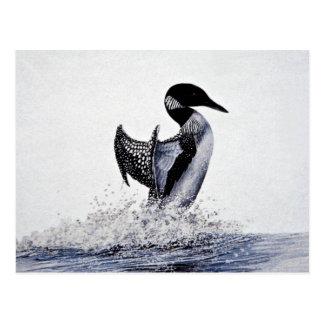 Common loon postcard