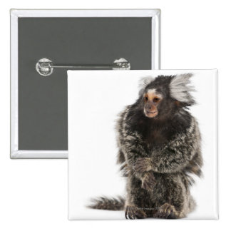 Common Marmoset - Callithrix jacchus (2 years Pins