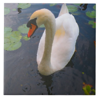 Common Mute Swan Ceramic Photo Tile