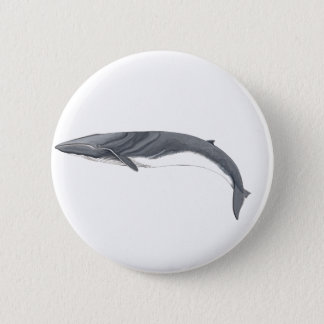 Common Rorcual clasp - aim whale pins