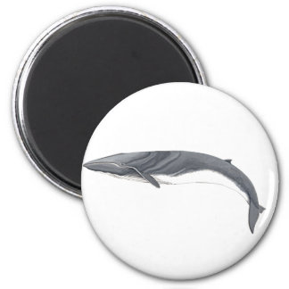 Common Rorcual magnet - Aim whale Magnet