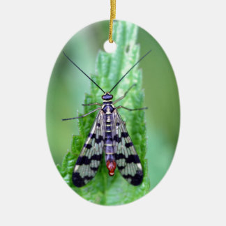Common Scorpion Fly (Panorpa communis) Ceramic Oval Ornament