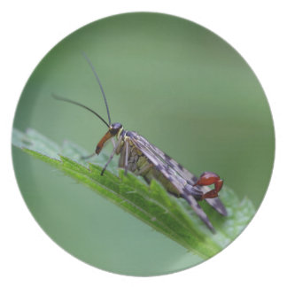 Common Scorpion Fly (Panorpa communis) Dinner Plates