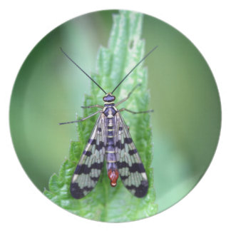 Common Scorpion Fly (Panorpa communis) Party Plate