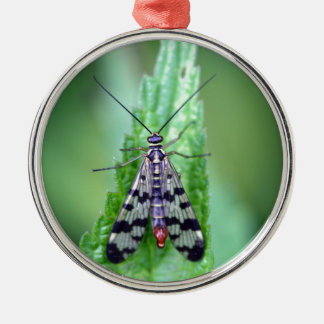 Common Scorpion Fly (Panorpa communis) Silver-Colored Round Ornament