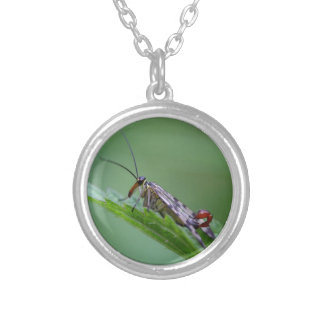 Common Scorpion Fly (Panorpa communis) Silver Plated Necklace