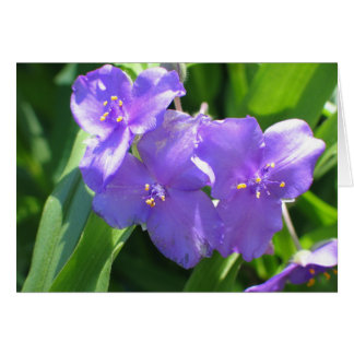 Common Spiderwort Card