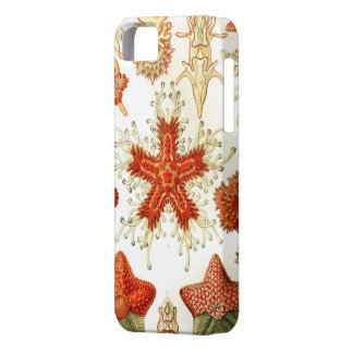 Common Starfish Designs iPhone 5 Covers