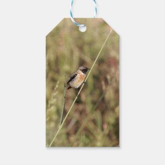 Common Stonechat (Saxicola torquatus) Gift Tags