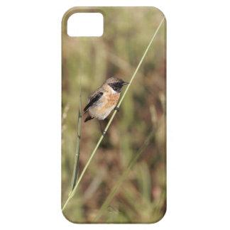 Common Stonechat (Saxicola torquatus) iPhone 5 Covers