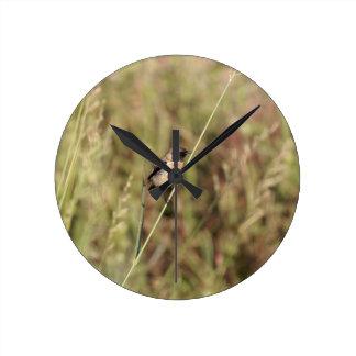 Common Stonechat (Saxicola torquatus) Round Clock