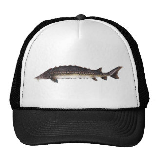 Common Sturgeon Hat