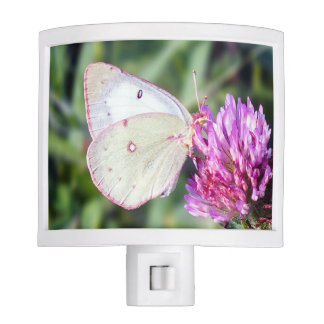 Common Sulfur Butterfly on Clover Night Light