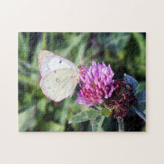Common Sulphur Butterfly on Red Clover Puzzle