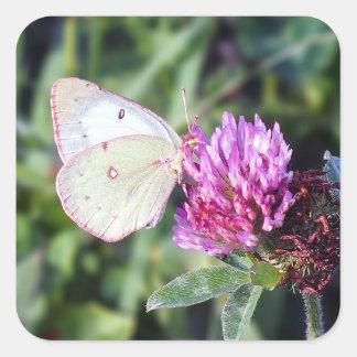Common Sulphur Butterfly Square Sticker