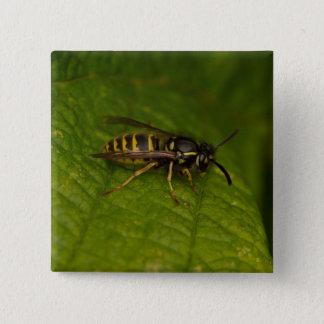 Common Wasp 2 Inch Square Button