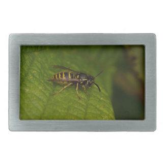 Common Wasp Belt Buckle