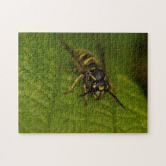 Common Wasp Jigsaw Puzzle