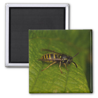 Common Wasp Magnet