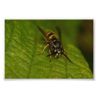 Common Wasp Photo Print