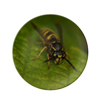 Common Wasp Plate