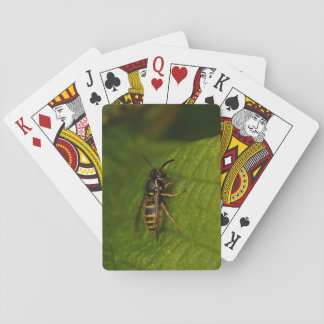 Common Wasp Playing Cards