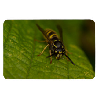 Common Wasp Rectangular Photo Magnet
