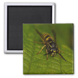 Common Wasp Square Magnet