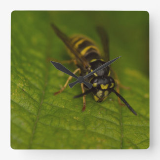 Common Wasp Square Wall Clock