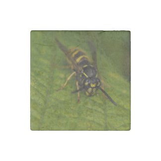 Common Wasp Stone Magnets