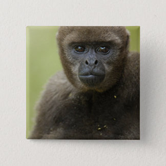 Common Woolly Monkey Lagothris lagothricha), 2 Inch Square Button