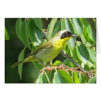 Common Yellowthroat Card