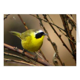 Common Yellowthroat • Joe Sweeney - card